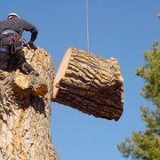 Professional Tree Removal and Stump Services in Mandeville